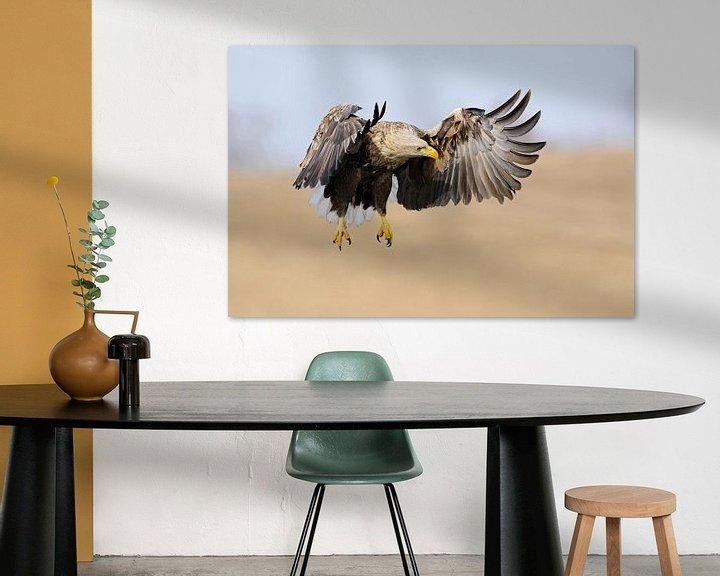 Beispiel: Seeadler ( Haliaeetus albicilla ) im Flug, jagend, hält Ausschau nach Beute, frontaler Anflug, kraft von wunderbare Erde