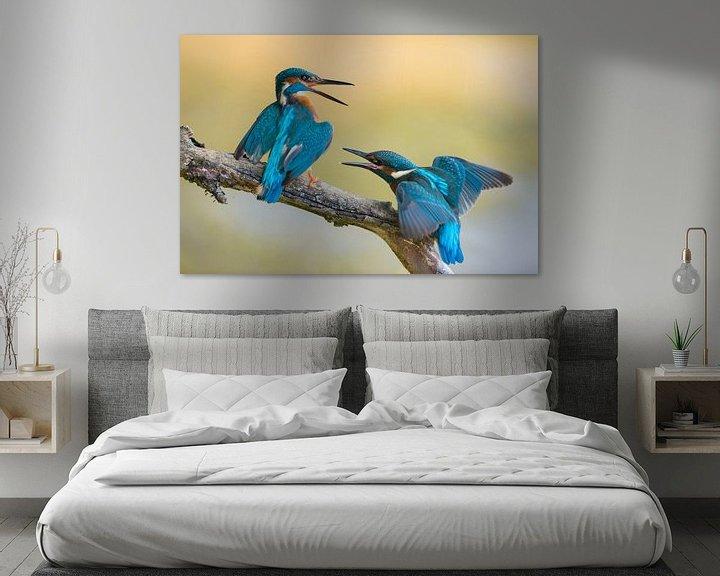 Beispiel: Eisvogel  / Eisvögel ( Alcedo atthis ) Jungvogel streitet mit Altvogel, wildlife, Europa. von wunderbare Erde