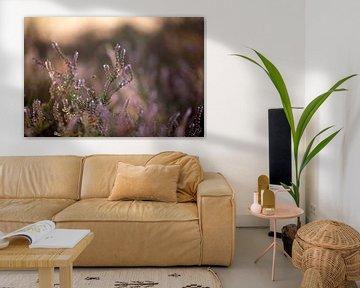 Blühende lila Heidekrautblüten auf der Veluwe von Karijn | Fine art Natuur en Reis Fotografie