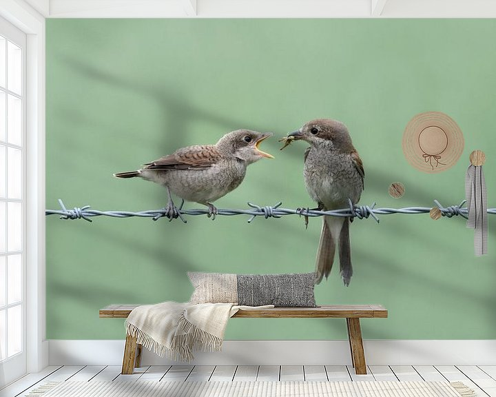 Beispiel fototapete: Neuntöter ( Lanius collurio ), Weibchen füttert bettelnden Jungvogel, wildlife, Europa. von wunderbare Erde