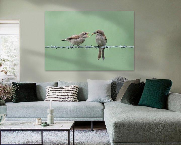 Beispiel: Neuntöter ( Lanius collurio ), Weibchen füttert bettelnden Jungvogel, wildlife, Europa. von wunderbare Erde