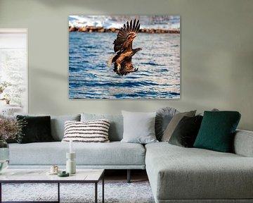 Lofoten Zeearend (Haliaeetus albicilla) van Ken Costers