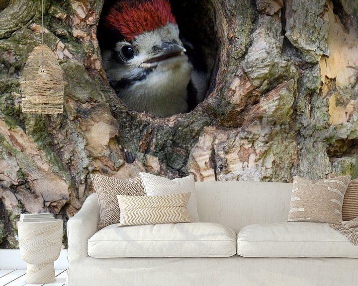 Beispiel fototapete: Buntspecht ( Dendrocopos major ) schaut aus der Spechthöhle heraus, wildlife, Europa. von wunderbare Erde