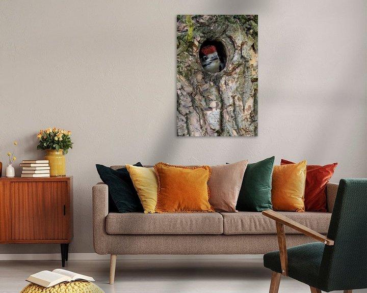 Beispiel: Buntspecht ( Dendrocopos major ) schaut aus der Spechthöhle heraus, wildlife, Europa. von wunderbare Erde