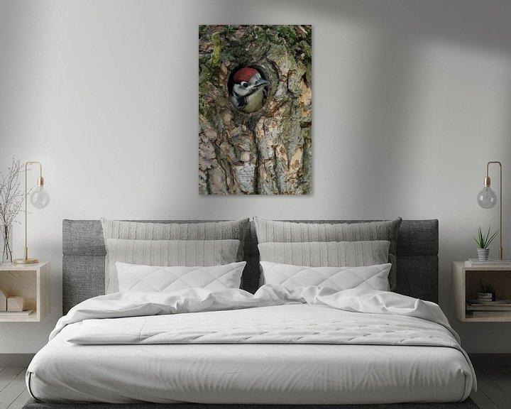 Beispiel: Buntspecht ( Dendrocopos major ) schaut aus der Spechthöhle heraus, bettelt um Futter, wildlife, Eur von wunderbare Erde