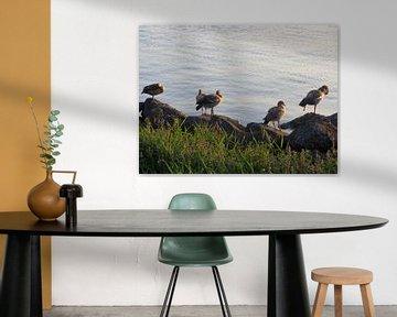 Watervogels aan de dijk von Nicky`s Prints