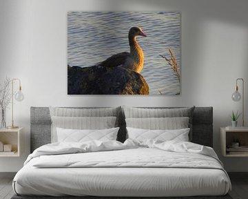 Prachtige watervogel op een rots van Nicky`s Prints