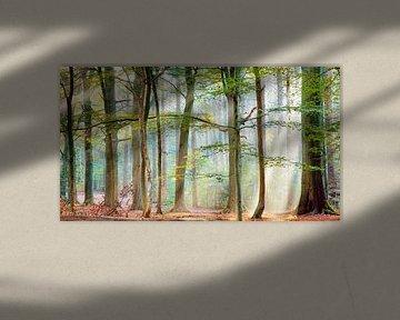 Wald-Sinfonie von Lars van de Goor