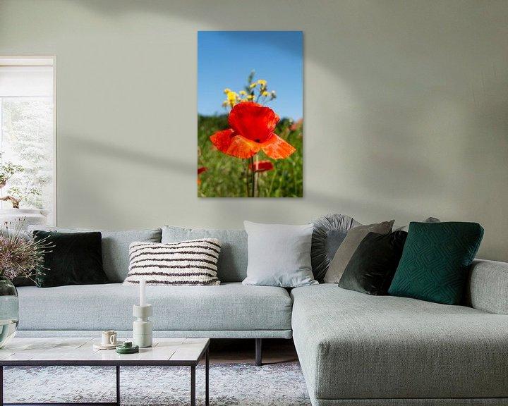 Beispiel: Mohnblume vor blauen Himmel von Jürgen Strathmann