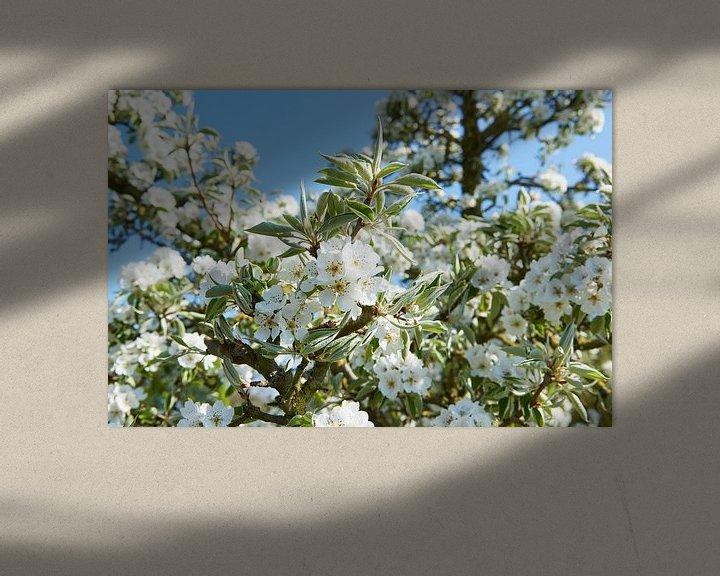 Sfeerimpressie: Perenbloesem in het voorjaar van Fred Roest
