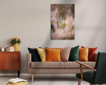 Blühende lila Heidekrautblüten auf der Veluwe. von Karijn | Fine art Natuur en Reis Fotografie