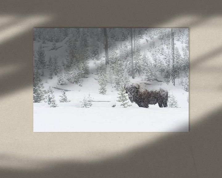 Beispiel: Amerikanischer Bison ( Bison bison ) im tief verschneiten Yellowstone National Park, Wyoming, USA. von wunderbare Erde