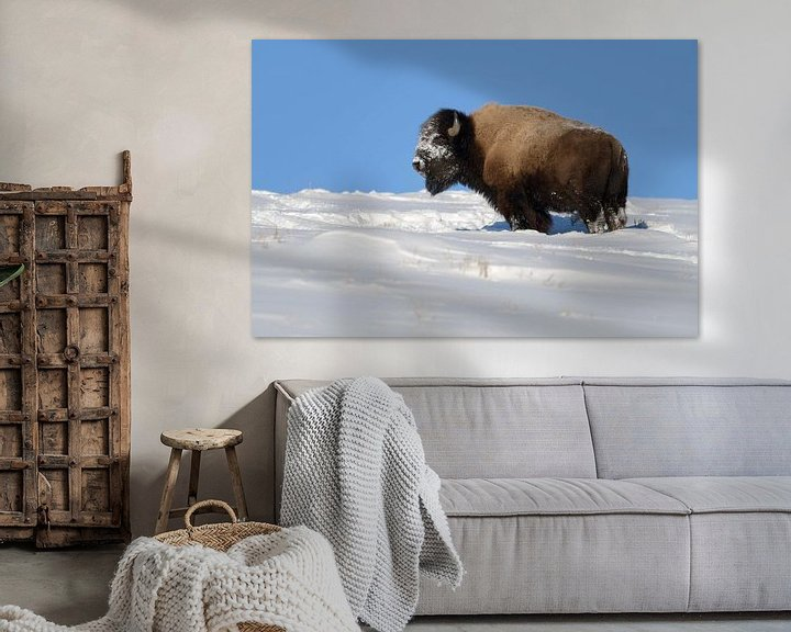 Beispiel: Amerikanischer Bison ( Bison bison ), kräftiger Bulle im Winter bei Traumwetter, Yellowstone NP,  US von wunderbare Erde