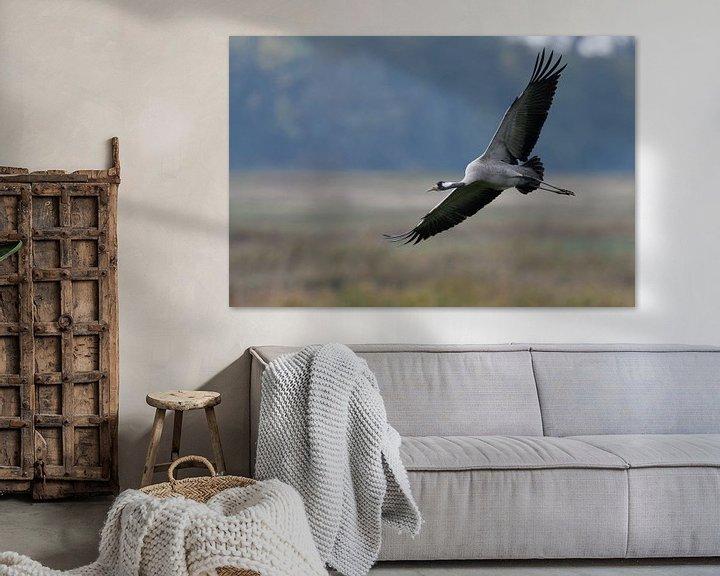 Beispiel: Kranich ( Grus grus, Graukranich ) im Flug, wildlife, Europa. von wunderbare Erde