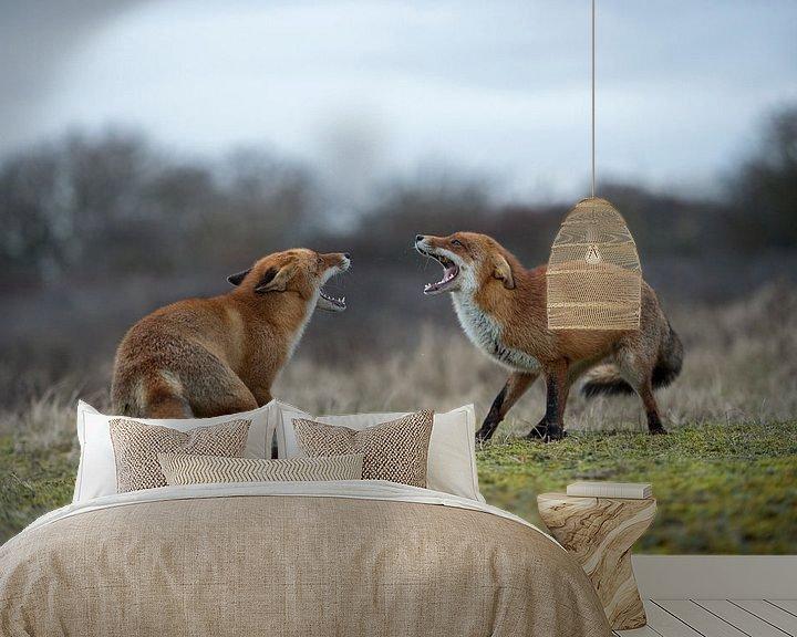 Beispiel fototapete: Rotfuchs ( Vulpes vulpes ), zwei Füchse im Streit, drohen einander mit aufgerissenem Fang, wildlife, von wunderbare Erde