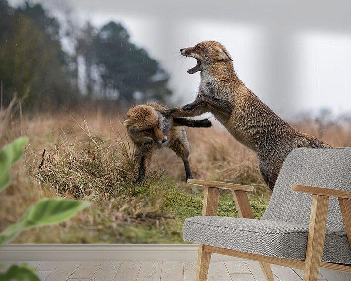 Beispiel fototapete: Füchse, Rotfüchse ( Vulpes vulpes ) in heftigem Streit, attackieren einander, wildlife, Europa. von wunderbare Erde