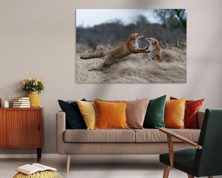 Beispiel: Füchse ( Vulpes vulpes ),  im Kampf, Streit,  Auseinandersetzung zwischen zwei Rotfüchsen, wildlife, von wunderbare Erde