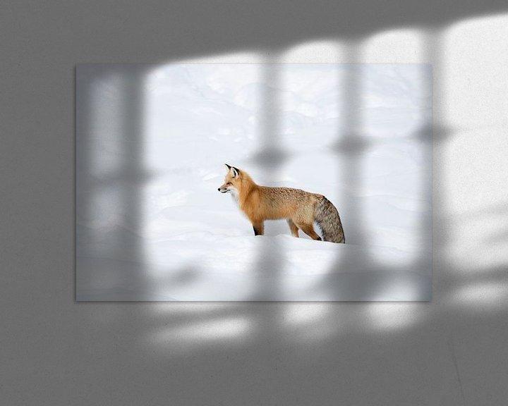 Beispiel: Fuchs, Rotfuchs ( Vulpes vulpes ) im Winter, in frisch gefallenem Schnee, Yellowstone NP,  USA. von wunderbare Erde