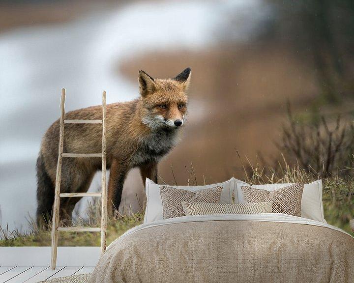 Beispiel fototapete: Fuchs ( Vulpes vulpes ) in seinem Revier, wildlife, Europa. von wunderbare Erde