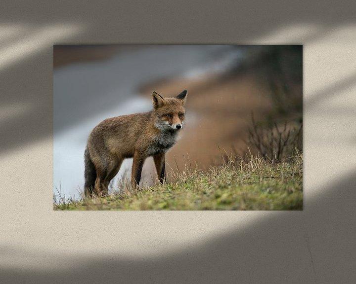 Beispiel: Fuchs ( Vulpes vulpes ) in seinem Revier, wildlife, Europa. von wunderbare Erde