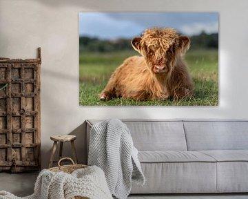 Schotse hooglander kalf van Richard Guijt Photography
