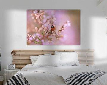Marienkäfer in der blühenden Heide von KB Design & Photography (Karen Brouwer)