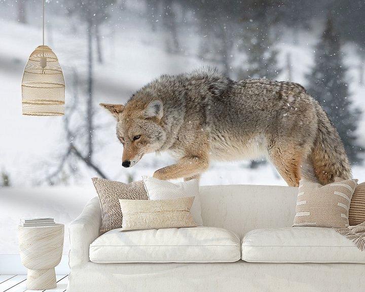 Beispiel fototapete: Kojote ( Canis latrans ), im Winter bei heftigem Schneefall , wildlife, Yellowstone NP,  USA. von wunderbare Erde