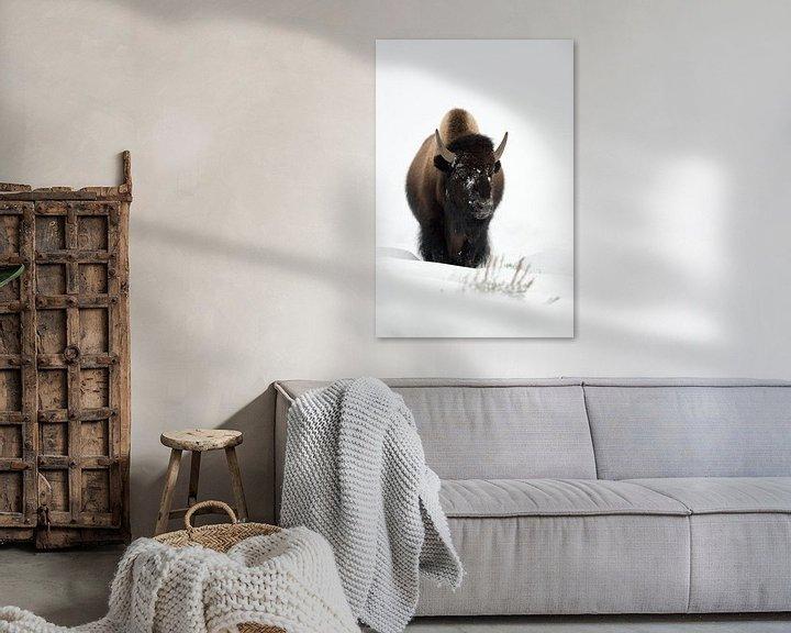 Beispiel: Bison ( Bison bison ), Bulle,  kommt im tiefen Schnee über einen Hügel, frontale Aufnahme, wildlife, von wunderbare Erde