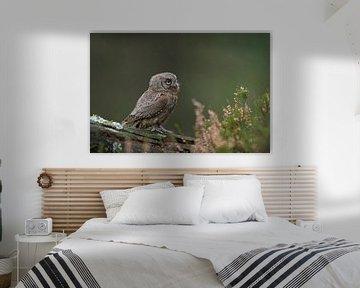Otusschelpen, een van de kleinste Europese uilen in de natuur. van wunderbare Erde
