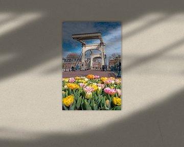 Blühende Tulpen an der Skinny Bridge in Amsterdam von Nisangha Masselink
