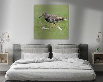 Rotschenkel ( Tringa totanus ), typischer Watvogel, Wiesenvogel im Frühjahr, wildlife, Europe. von wunderbare Erde