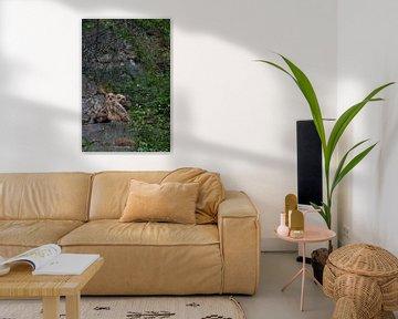 Junge Eulen, zwei Uhus ( Bubo bubo ) sitzen in einem alten Steinbruch und schauen in Ri von wunderbare Erde