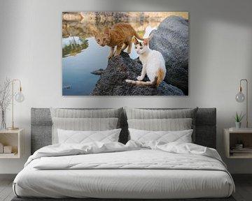 Twee kittens bij een meer in Griekenland van Katho Menden