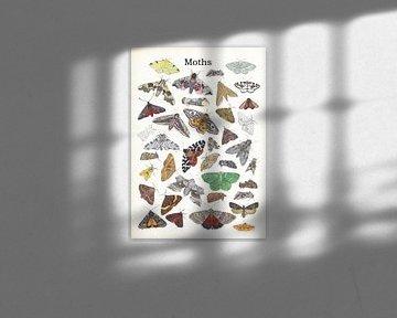 Moths van Jasper de Ruiter