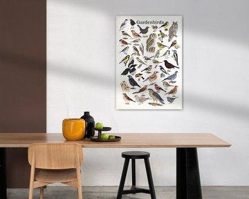 Gardenbirds van Jasper de Ruiter