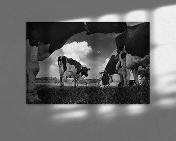 Des vaches dans la prairie sur Hans Heemsbergen