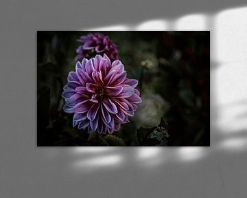 Blüte in Lila von Thilo Wagner