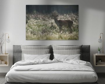 Damhirsch ( Dama dama ), Jungtier, Spießer, auf taubedeckter Wiese frühmorgens  im Herbst, wildlife, von wunderbare Erde
