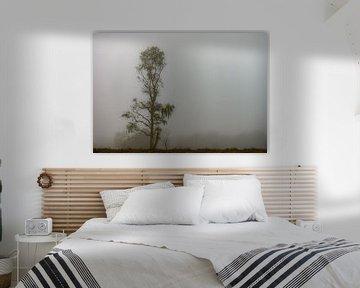 berkenboom in de mist van Tania Perneel