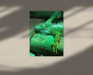 Reptil 2 von tania mol