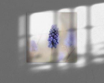 Blauw Druifje van Krista Jacobs