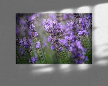 Duft der Provence von Claudia Moeckel