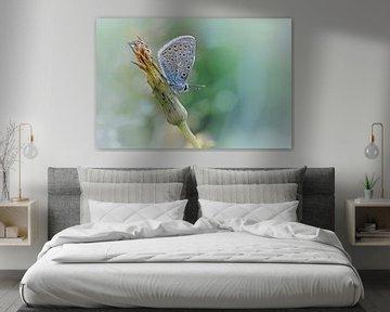 Free your mind ....... (Blaue Version) (Schmetterling, Sommer, Natur) von Bob Daalder