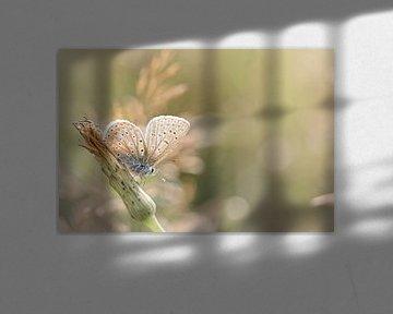 Sonnenbaden Schmetterling ... (Schmetterling, Sommer, Natur) von Bob Daalder