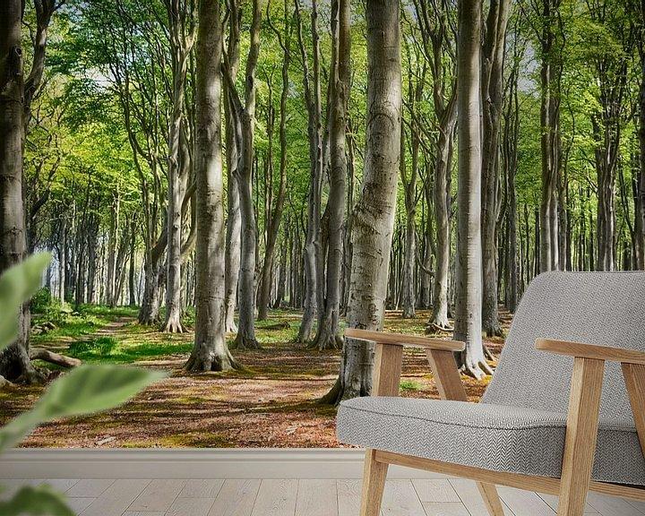 Beispiel fototapete: Der Gespensterwald von Nienhagen von Joachim G. Pinkawa