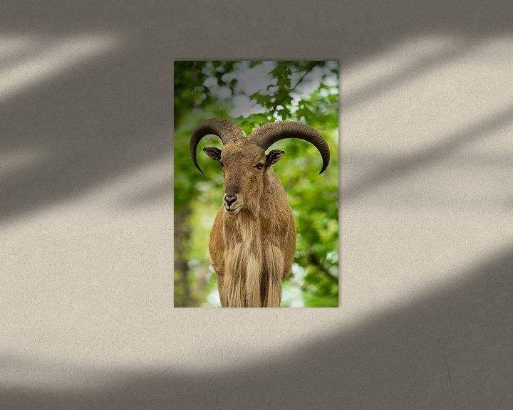 Beispiel: Mähnenspringer von Tierfotografie.Harz