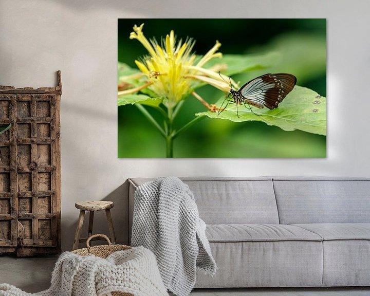 Beispiel: Schmetterling auf gelber Blume von Anjo ten Kate