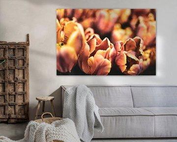 orangene Tulpen von Nadine Rall