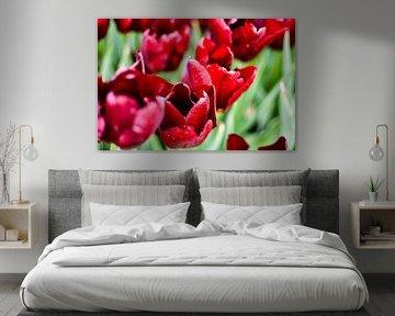 ein Meer aus roten Tulpen von Nadine Rall