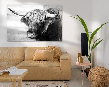 Porträt einer schottischen Highlander-Kuh in schwarz-weiß / Rindfleisch von KB Design & Photography (Karen Brouwer)